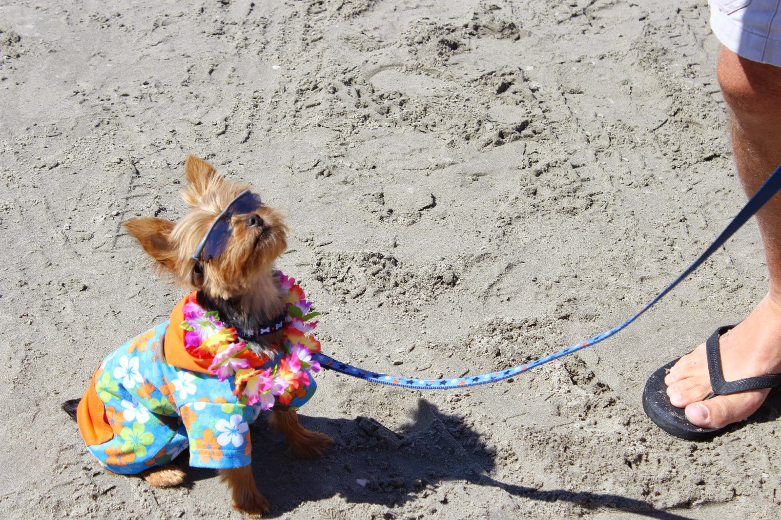 wildwood dog beach the best beaches in the world