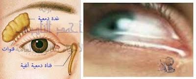 آلية عمل الجهاز المناعى فى  الإنسان - المناعة الطبيعية -خط الدفاع الأول - الدموع