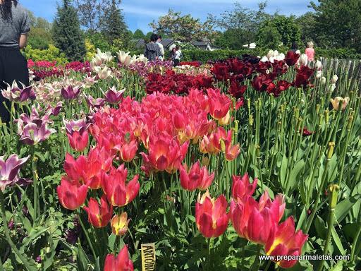 jardines en malmo