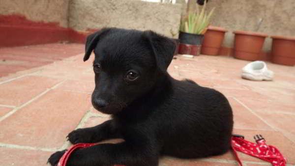 cachorro de tamaño pequeño