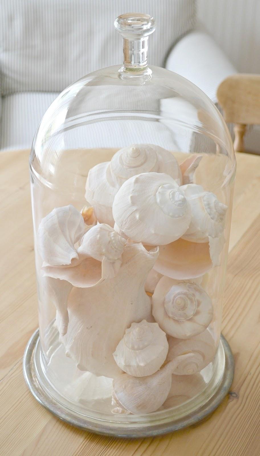 Themes For Baby Room Seashell Displays