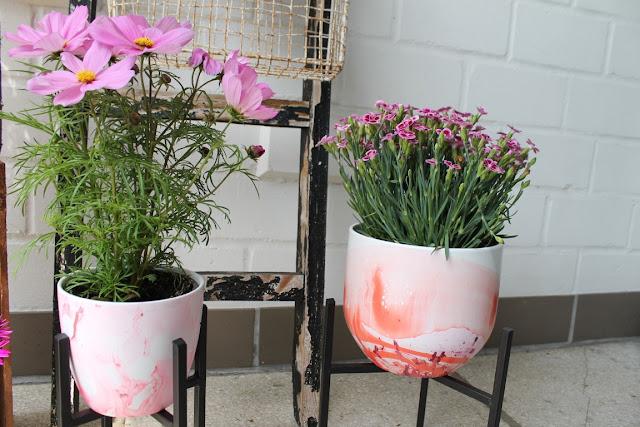 Cosmea Gartennelken Sommerpflanzen 1000 gute Gruende DIY Jules kleines Freudenhaus
