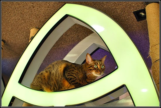 cat cafe pictures