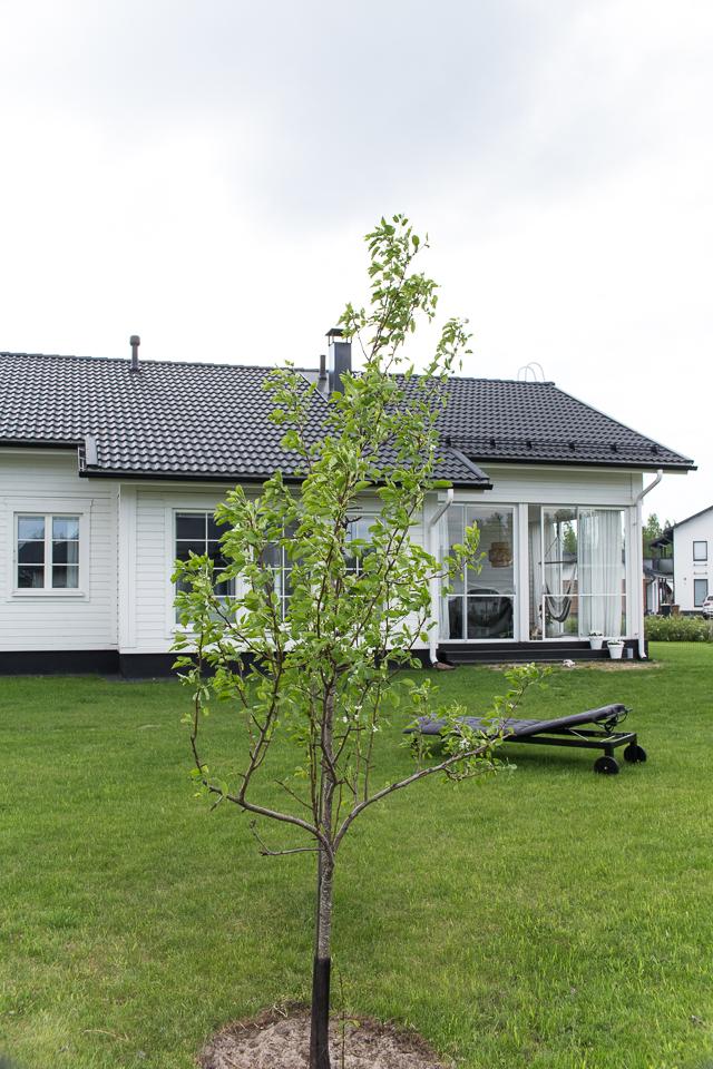 Villa H, valkoinen talo, omakotitalo, lasitettu terassi, puutarha, päärynäpuu