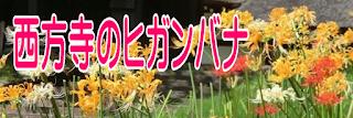 西方寺の彼岸花