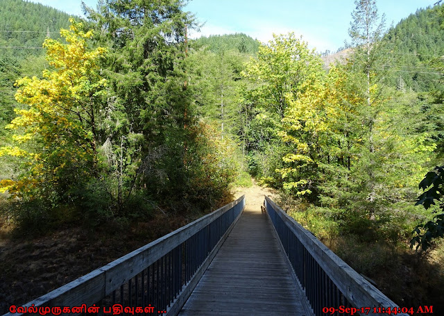 Footbridge to Jones Creek Wilson River