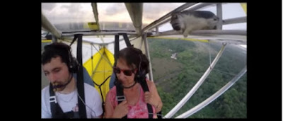 A cat on a flying glider plane!