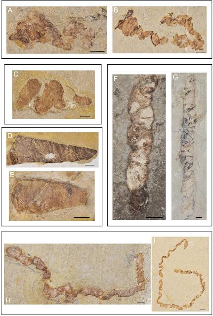 Coprolites reveal Early Cretaceous aquatic vertebrate diversity