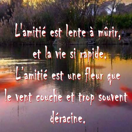 Citation Damitié Messages Et Sms Damour