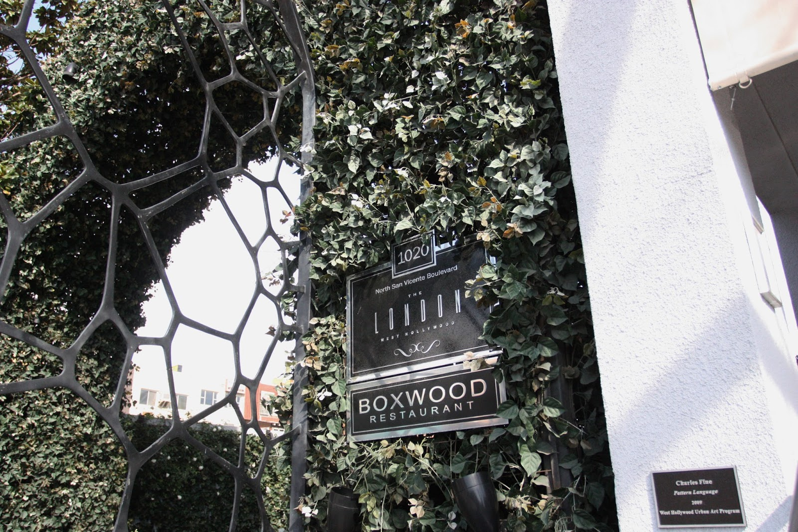 Boxwood at the London