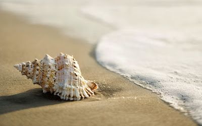 shell-beach-wallpaper-2560x1600