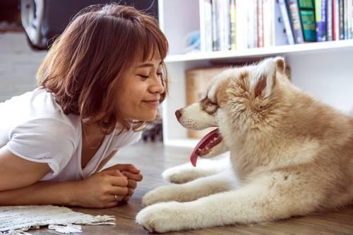 Saiba como cuidar do seu cão com economia, usando máquina de tosa