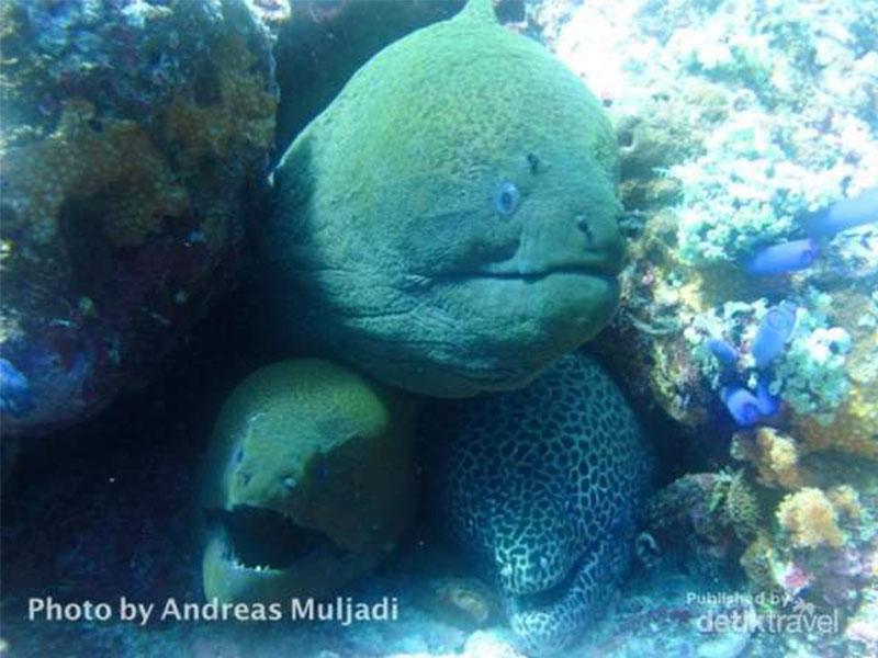 Moray Eel dalam lobang
