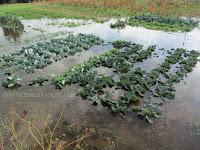 Velika plima i poplave Babin laz Supetar slike otok Brač Online