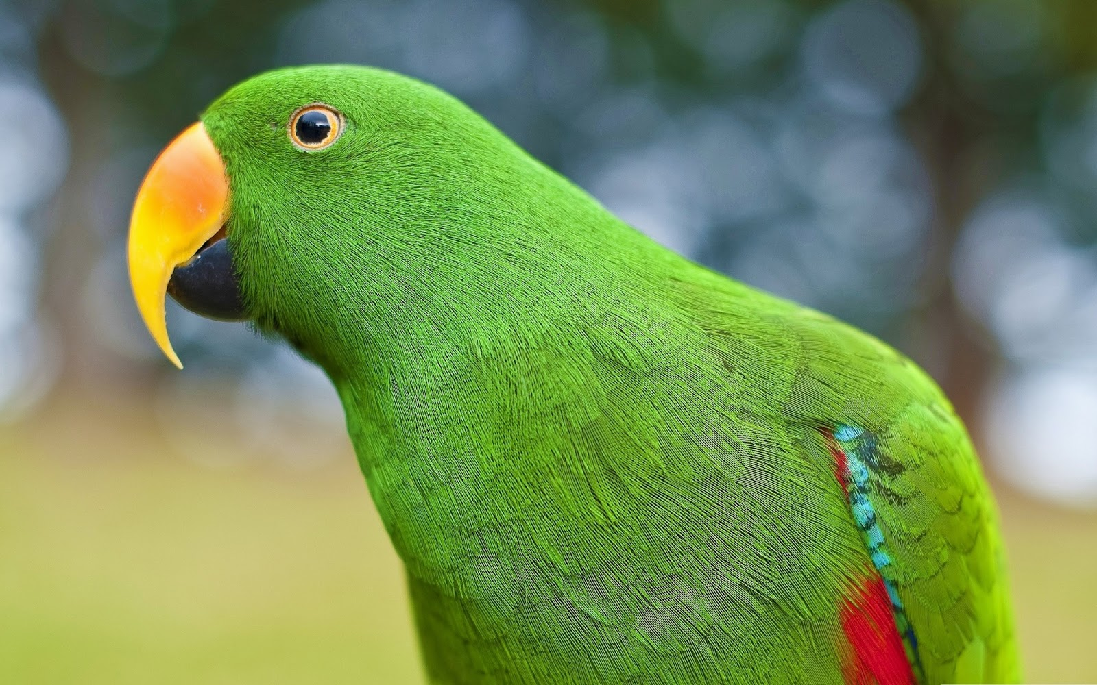 beautiful green parrots wallpapers - Wallpapers Free - photo#35