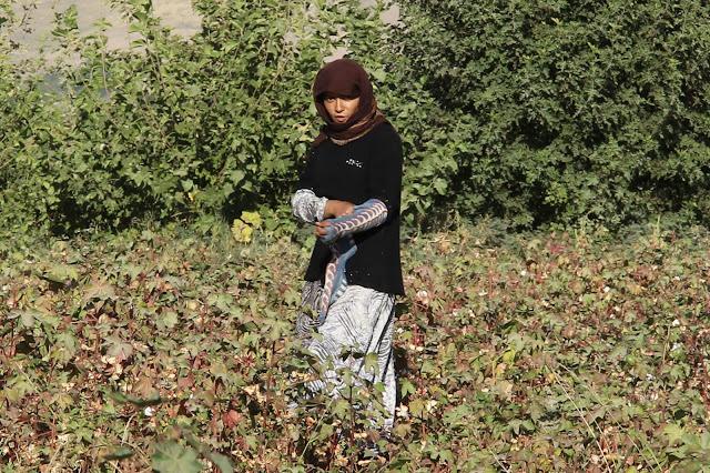 Tadjikistan, Yavan, coton, cueilleuse, © L. Gigout, 2012