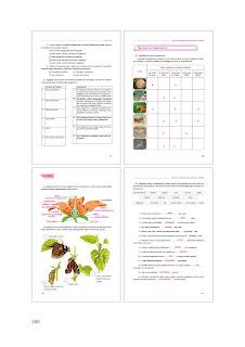 7. Sınıf İngilizce Ders Kitabı Cevapları Dikey sayfa 250