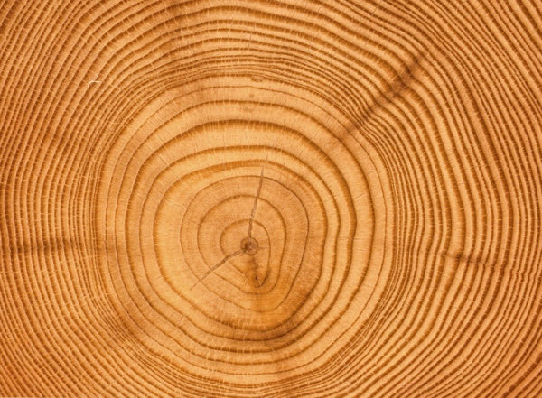 Uncertainties in tree-ring-based climate reconstructions probed