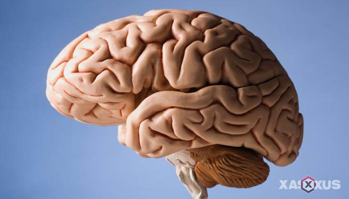 Fakta 15 - Otak janin 20 minggu semakin berkembang