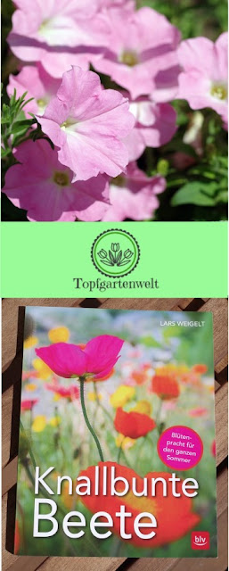 Gartenblog Topfgartenwelt Buchrezension: Knallbunte Beete, Pinterest