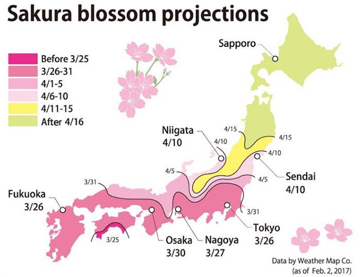 Sakura blossom projections