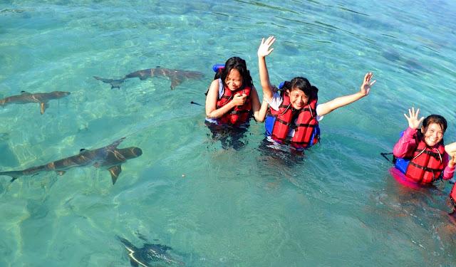 Serunya Wisata Berenang dengan Ikan Hiu di Karimunjawa