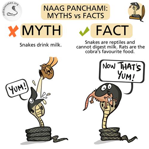 Pin på Snek |Milk Snake Humor
