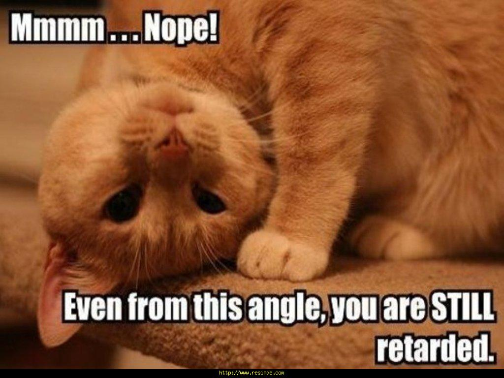 funny animals wallpapers cats - photo #30