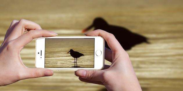 Efecto de cámara de celular sobre imagen de Pilpilen