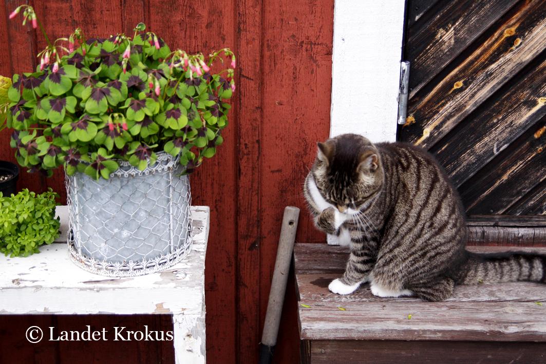 hur du koppla in en katt Genie Lissabon dejtingsajter