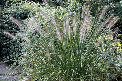 A life designing garden design tips planting design for Planting plans with grasses