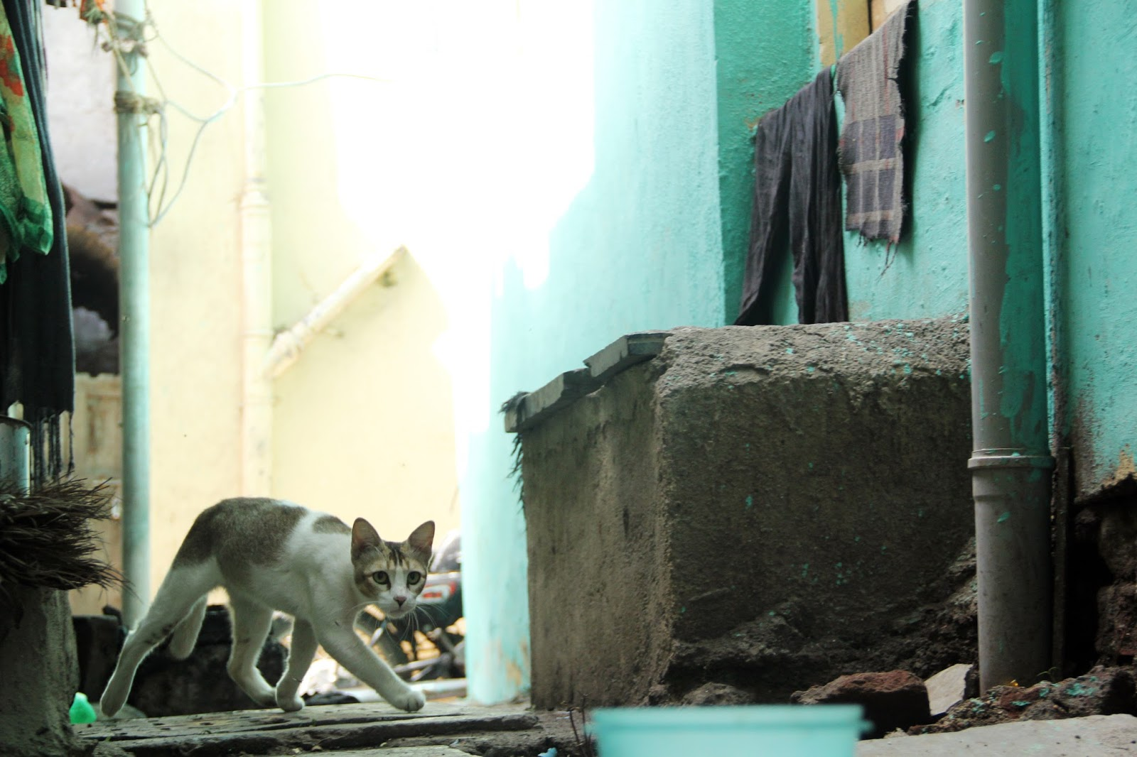 Story of Two Hungry Cats | Ajitsingh Chauhan Photography Blog