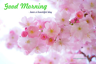 beautiful morning wishes with cherry tree flowers