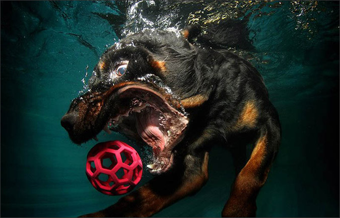 Notes from the Pack - a dog blog. Funny underwater dog photos by Little Friends Photo.
