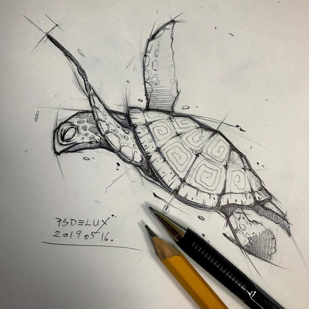 08-Turtle-Psdelux-Fineliner-Ink-and-Pencil-Animal-Drawings-www-designstack-co