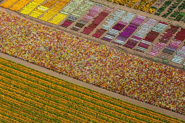1.) Beautiful and vibrant flower fields in Lompoc, California. - You Think You Know What The World Looks Like. Then You Look At It Like This And… WHOA. Amazing.
