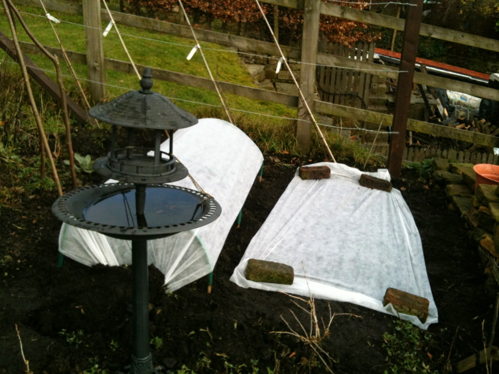 Use fleece to protect crops #growing #gardening