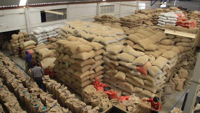 Oaxaqueños se independizan de los monopolios y empiezan a exportar su café sin intermediarios