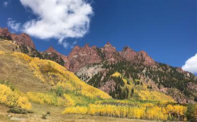 yellow aspen on the mountain side, Colorado