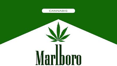 A indústria do tabaco começa a apostar no florescente mercado da maconha.