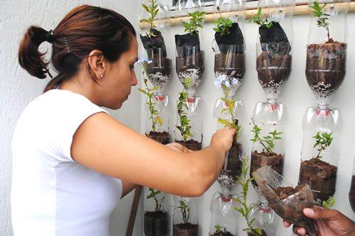 Reciclagem ao alcance das crian as horta de garrafas pet for Construccion de un vivero paso a paso