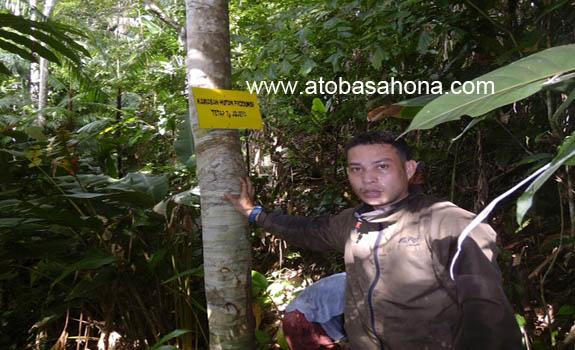Konsep Hutan Normal