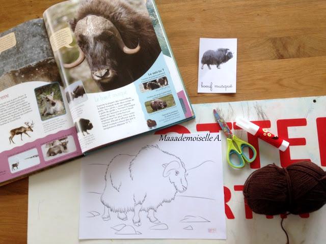 || Activité : Boeuf musqué, collage de laine et aquarelle + fiche d'écriture