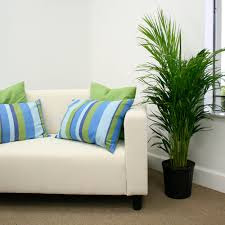 Manufactured Areca Palm Plant ! Home Decor