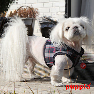 http://www.organicpetboutique.com/Puppia-s/136.htm