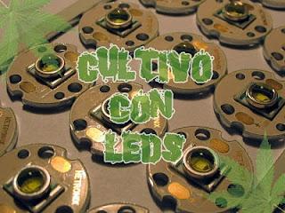 Portada cultivo marihuana con LED