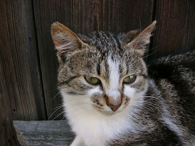 dzień kota, zdjęcie kota, kotka, nietypowe święta
