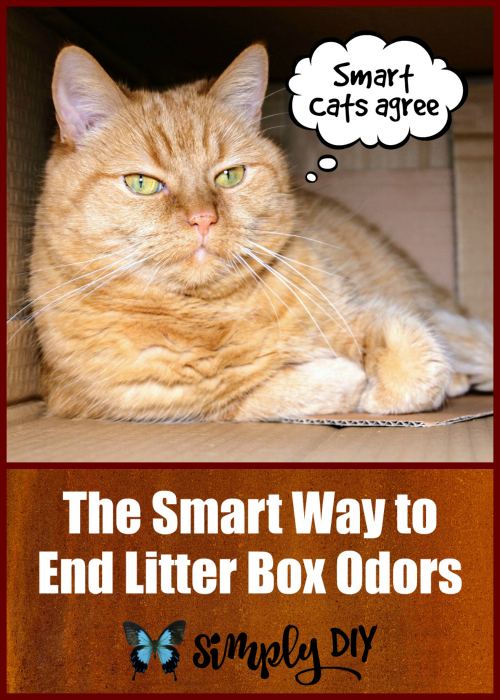 Smart Cat Box System