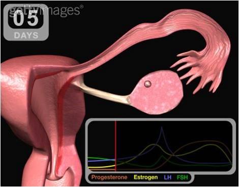 quando o ovulo esta maduro