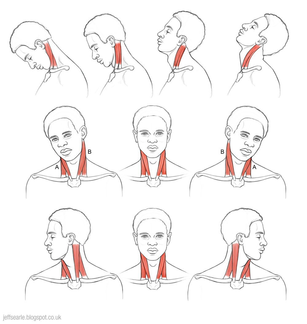 Neck Range Of Motion Exercises Pictures to Pin on